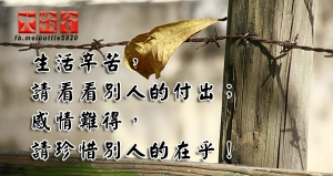 生活辛苦,請看看別人的付出;感情難得,請珍惜別人的在乎!