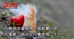 別輕易放棄感情,誰都會心疼;別衝動下做決定,會後悔一生!